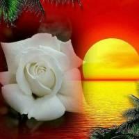 Für einen guten FREUND gute NACHT Sweet Dreams